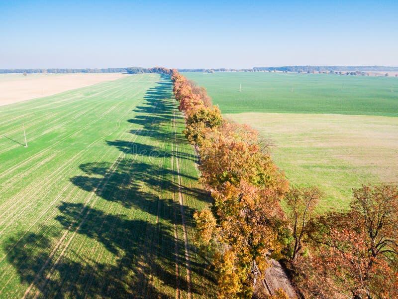 Allée des arbres d'automne parmi les champs verts images libres de droits