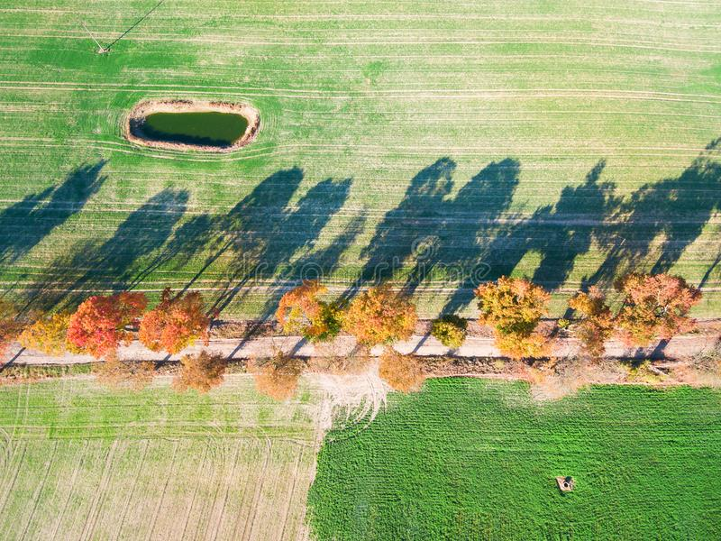 Allée des arbres d'automne parmi les champs verts dans la campagne photographie stock