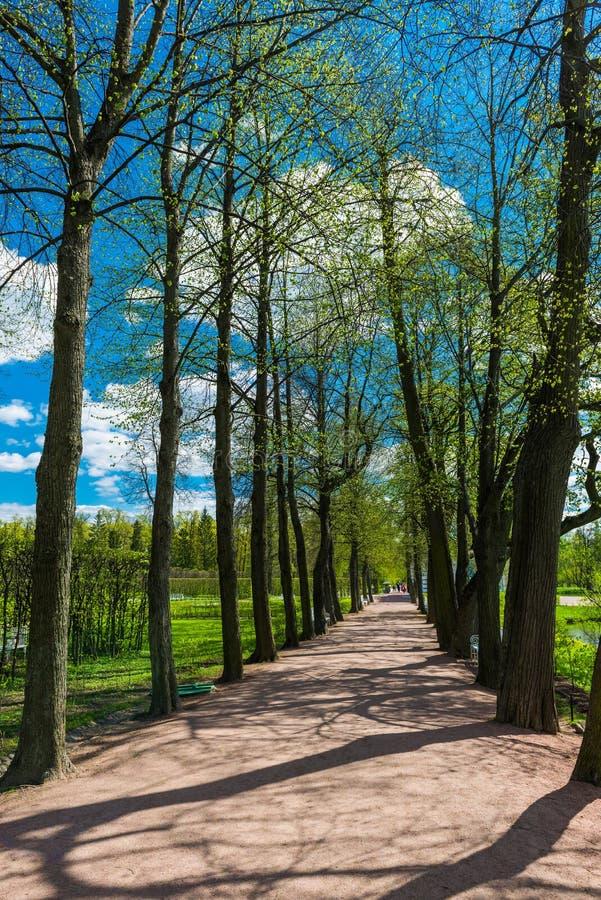 Allée en Catherine Park, Tsarskoye Selo (Pushkin) photos libres de droits