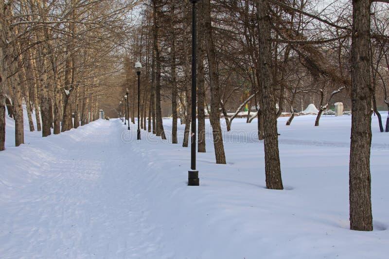 Allée en parc d'hiver photographie stock libre de droits