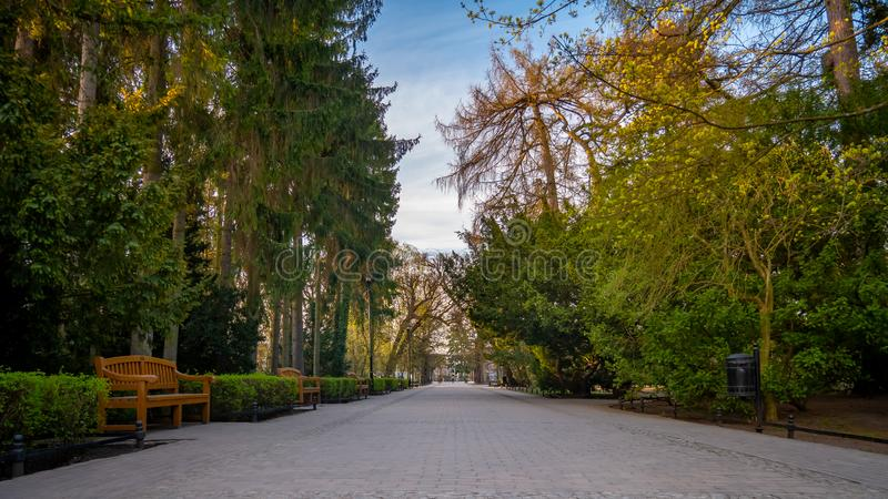 Allée en parc d'Oliwa dans le paysage tôt de ressort Entr?e au stationnement images libres de droits
