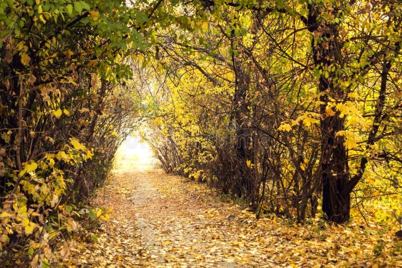 Allée en parc ensoleillé d'automne avec les arbres colorés et la lumière du soleil image stock