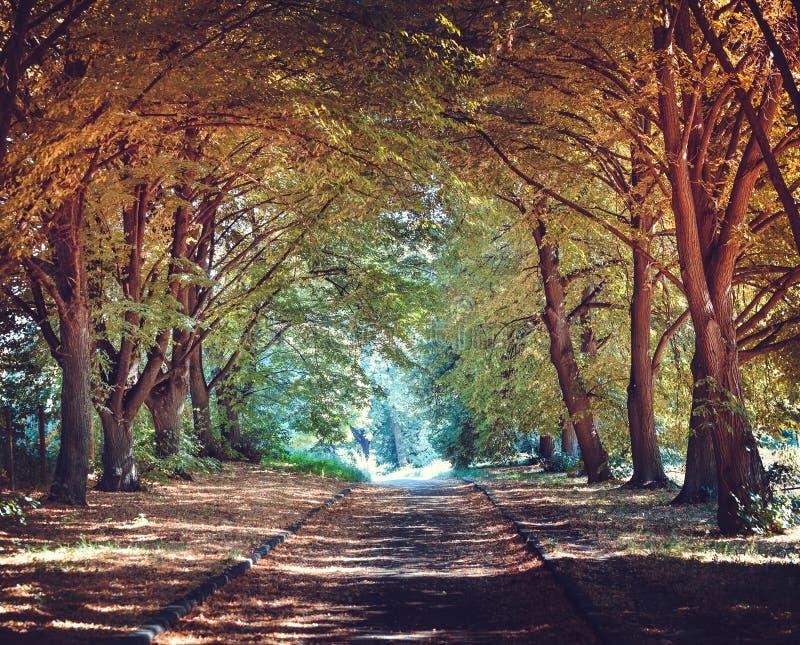 Allée en parc Jour de septembre photographie stock libre de droits