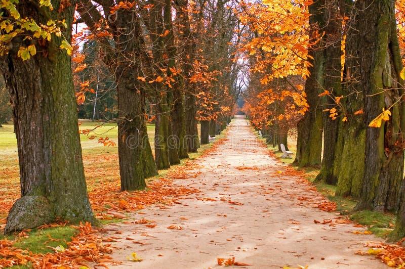 Allée et chemin d'arbre images stock