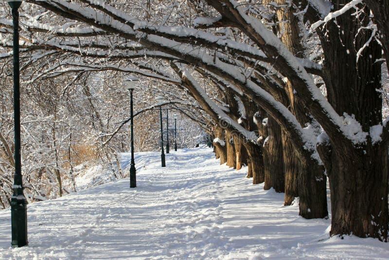 Allée parmi des arbres en hiver photos libres de droits