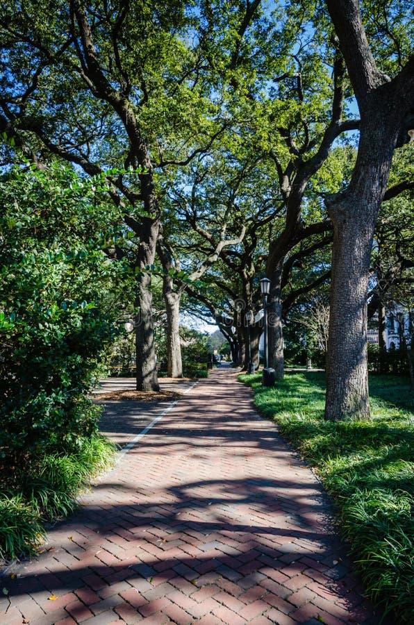 Allée -Savannah, GA royalty free stock photography