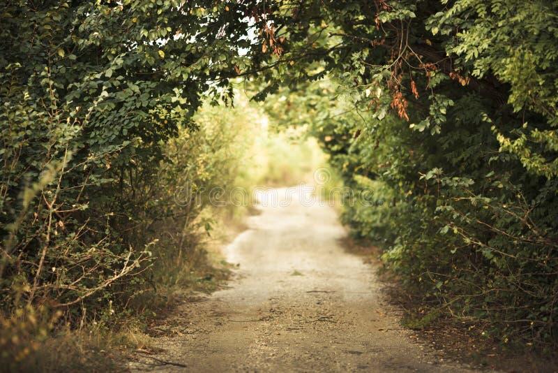 Allée verte photographie stock libre de droits