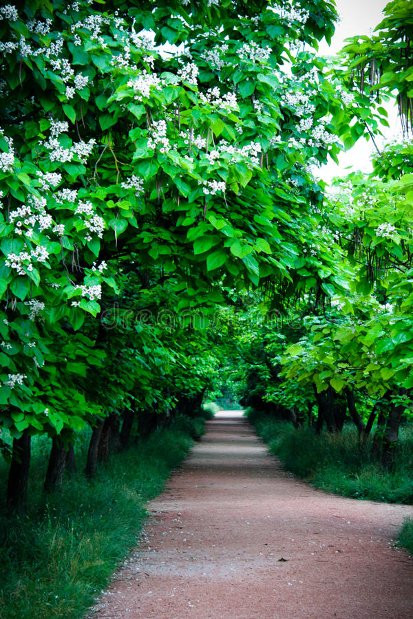 Allée verte image libre de droits