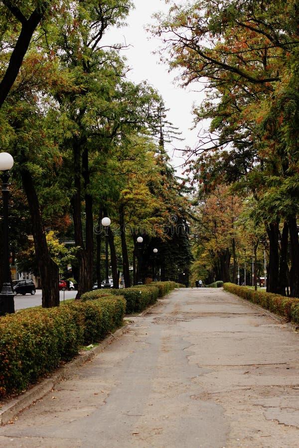 Allée verte dans la ville image stock