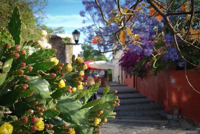 Allées au centre historique de Colonia De Sacramento, Uruguay photo libre de droits