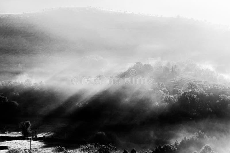 All'alba i raggi solari sulle colline tagliano la nebbia e gli alberi immagini stock libere da diritti