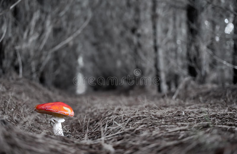 Download All alone stock image. Image of strong, forest, fungus - 16125343