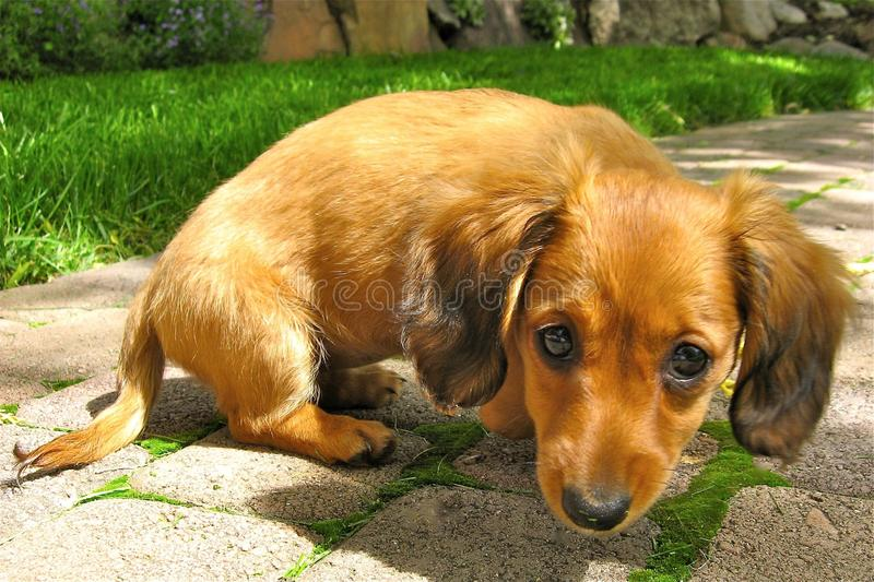 A Perfect Puppy stock image