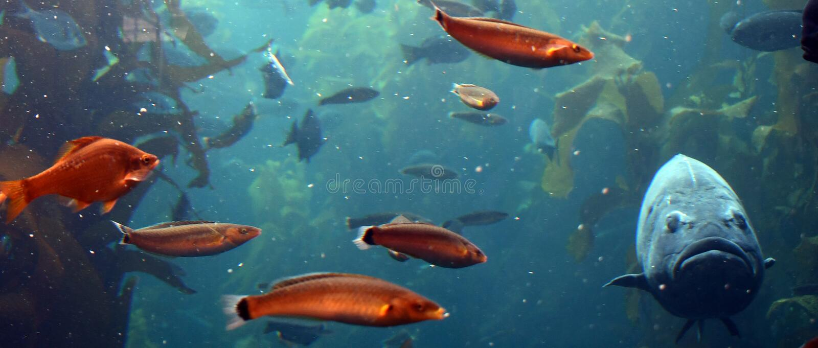 All the fish looked at the larg fish stock photos