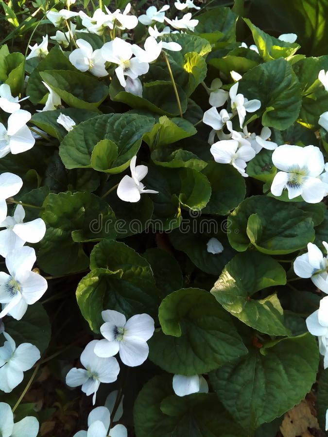 Flower, spring, nature, white stock images