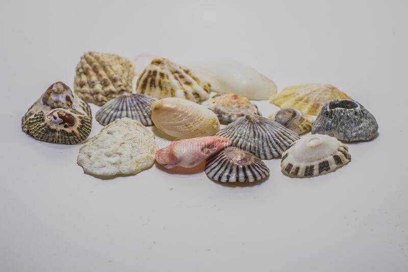All forms of sea shells royalty free stock photos