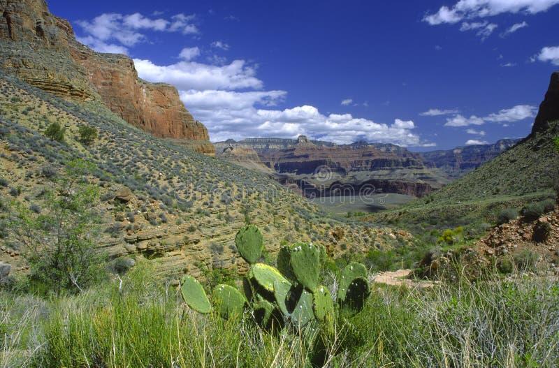 All'interno di grande canyon immagine stock libera da diritti