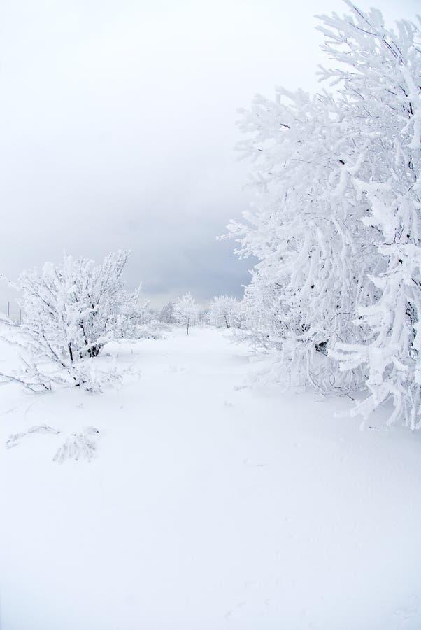 all snow under white royaltyfri fotografi