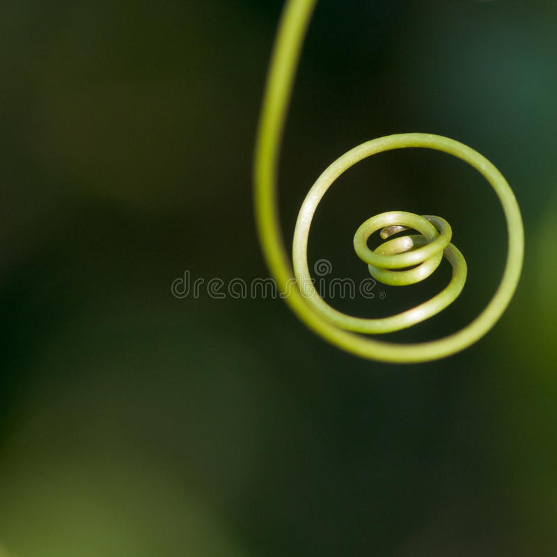 Download All The Way To The End stock image. Image of flora, space - 27784855