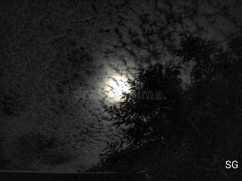 Alla luce di luna scura immagini stock libere da diritti
