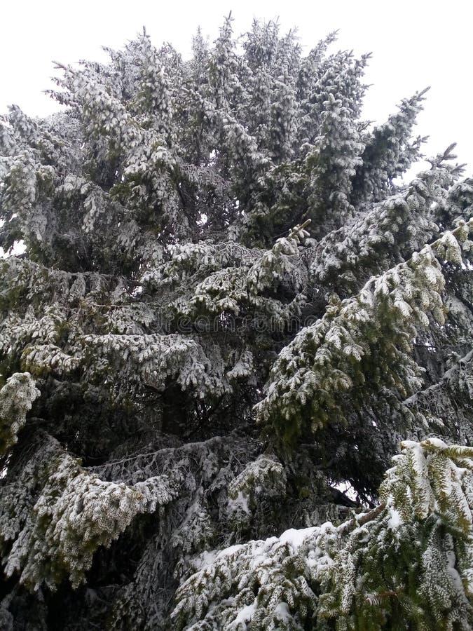 alla några individuella objekt för elementillustrationen skalar formatsnow till treevektorn royaltyfri foto