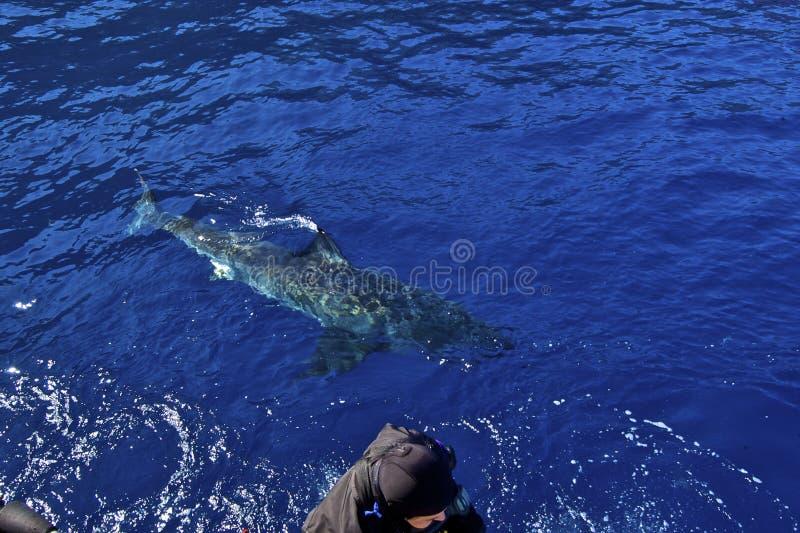 Allarme dello squalo fotografia stock libera da diritti