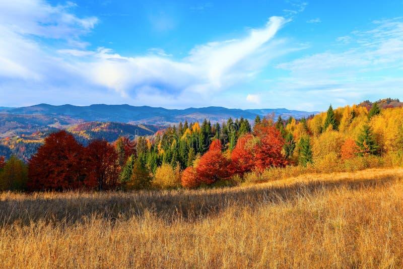 Alle alte montagne con la foresta densa ci sono alberi arancioni piacevoli sul grande prato inglese fotografie stock
