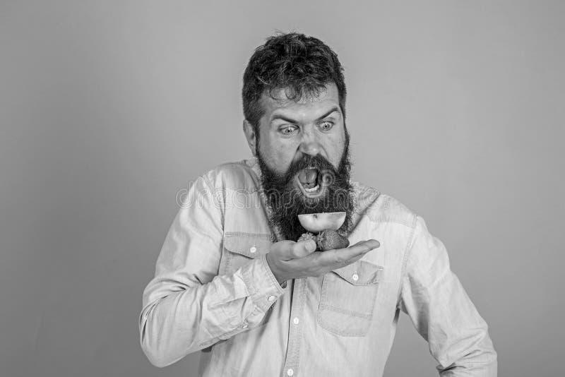 Alle f?r mich Schreiendes hungriges Gesicht des Mannes mit Bart isst organische Festlichkeiten B?rtige Grifferdbeeren und -apfel  stockfoto