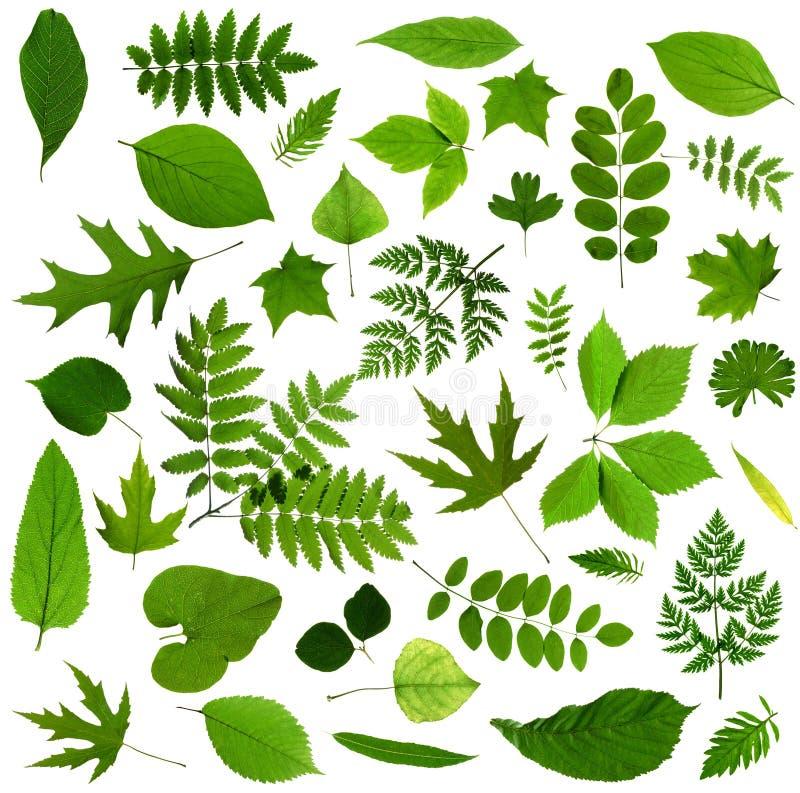 Alle soorten van groene bladeren stock afbeeldingen