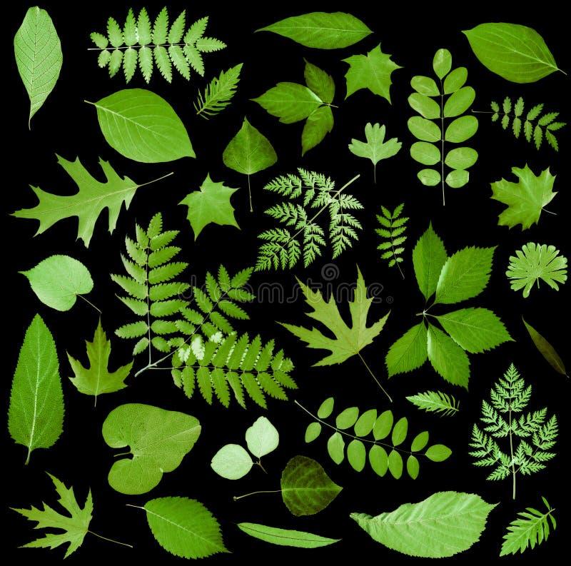 Alle Sortierungen der grünen Blätter lizenzfreie stockfotografie