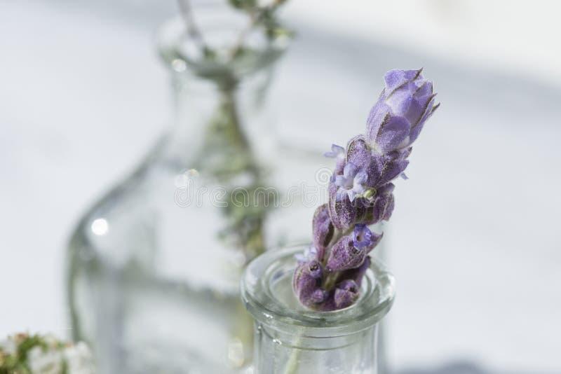 Allebei van etherische olie met lavendel stock foto's