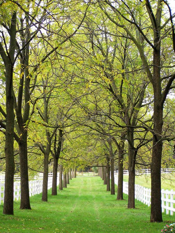 Allee. A stroll down a tree lined allee on a fall morning royalty free stock image