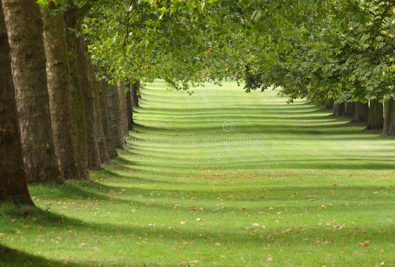 Allee der Bäume lizenzfreie stockbilder