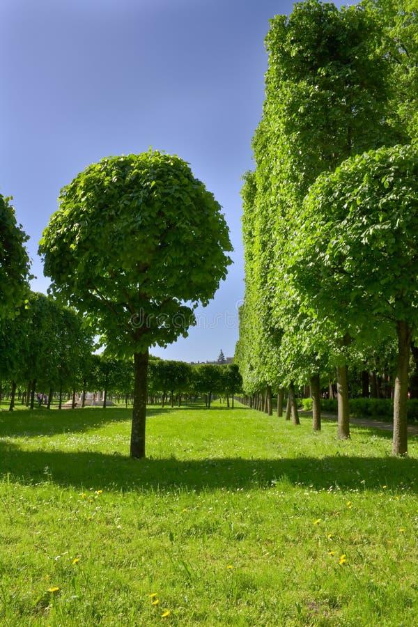 Allee der Bäume im well-groomed Park. stockfotos