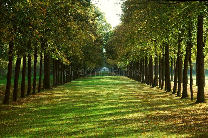 Allee in einem Park im Herbst stockfotografie