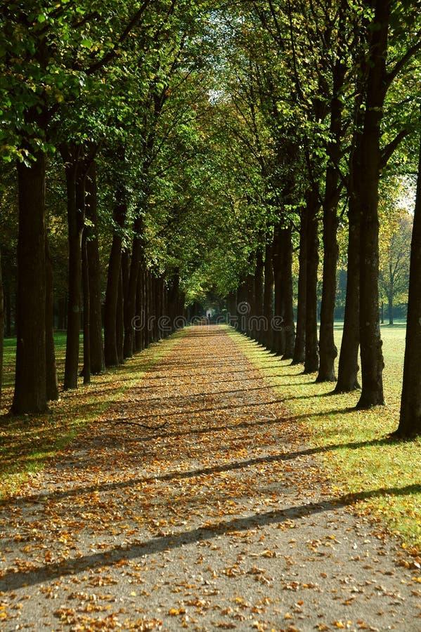 Allee in einem Park im Herbst lizenzfreies stockbild