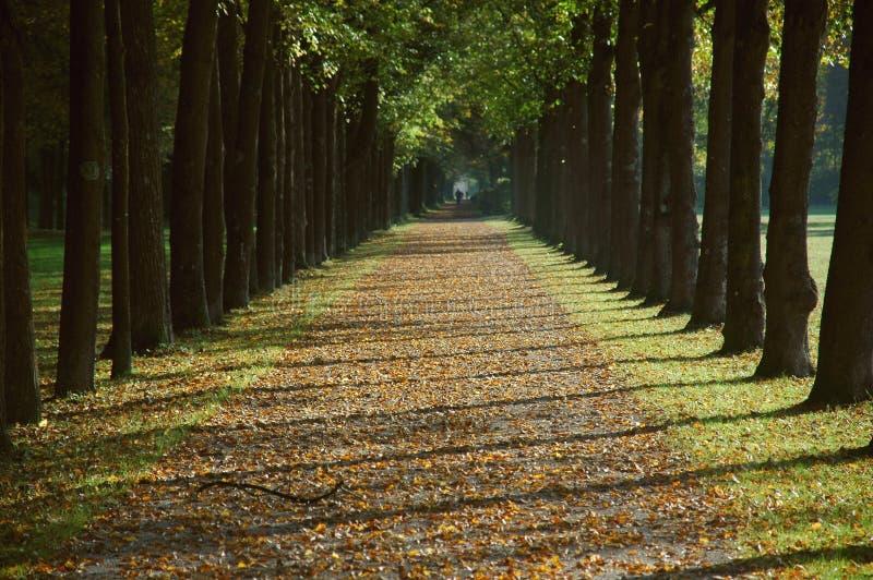 Allee in einem Park im Herbst lizenzfreies stockfoto