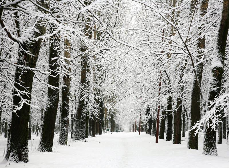 Allee mit den Niederlassungen umfasst mit Schnee lizenzfreie stockbilder