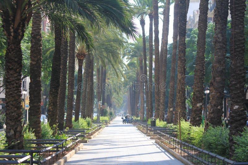 Allee mit Palmen in Valencia stockfotografie