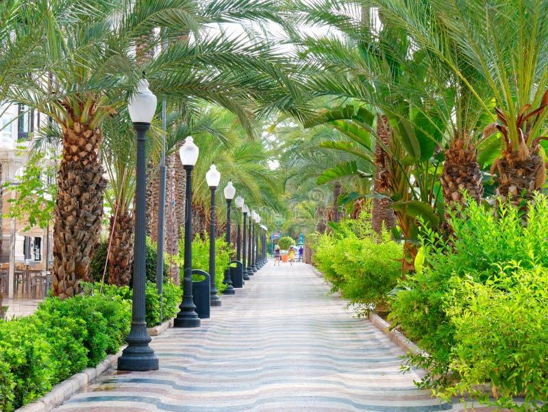Allee von Palmen in Alicante Hauptpromenade für Touristen Explanada spanien lizenzfreies stockbild