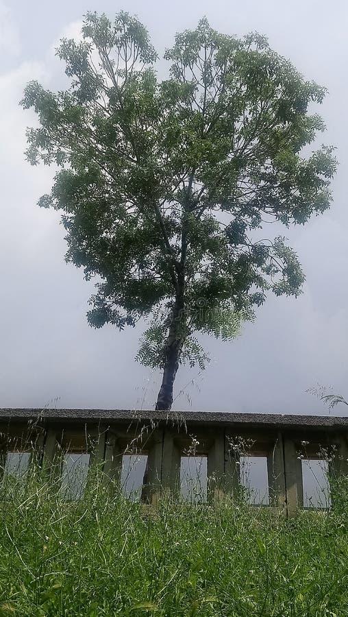 Alleen boom stock afbeeldingen