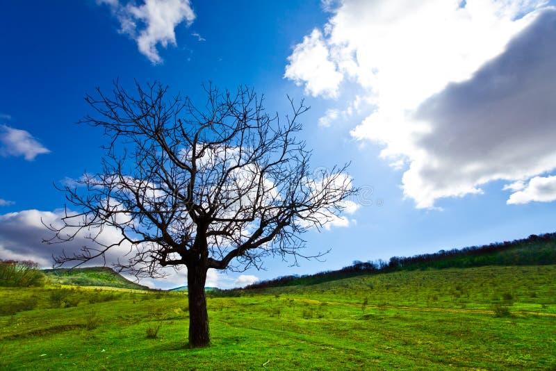 Alleen boom stock afbeelding