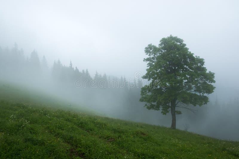 Alleen boom in de mist stock foto's