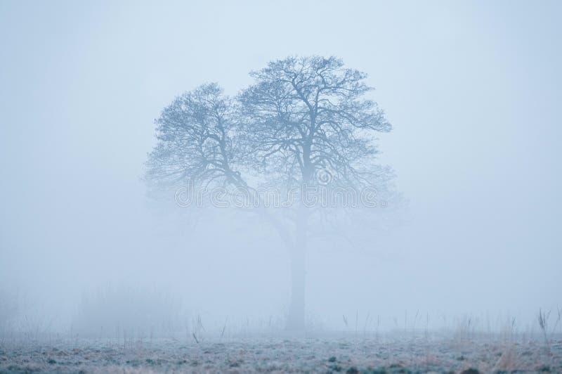 Alleen boom, die van een mist in vroege mistige de winterochtend toenemen royalty-vrije stock foto