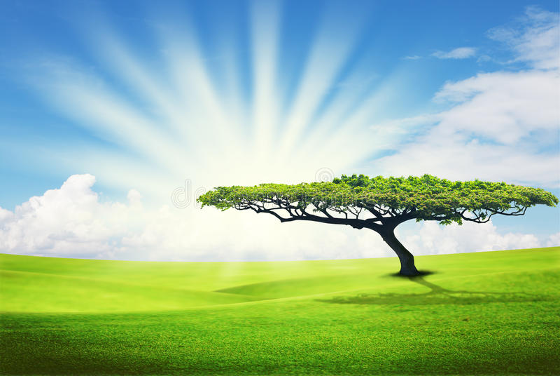Alleen boom op grasgebied royalty-vrije stock fotografie
