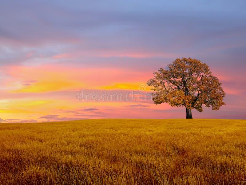 Alleen boom op het gebied royalty-vrije stock afbeeldingen
