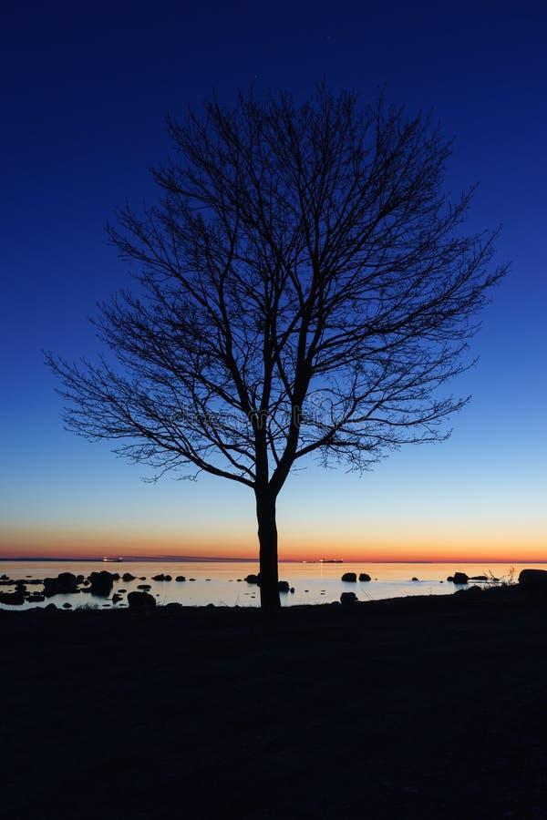 Alleen boom 's nachts silhouet stock foto's