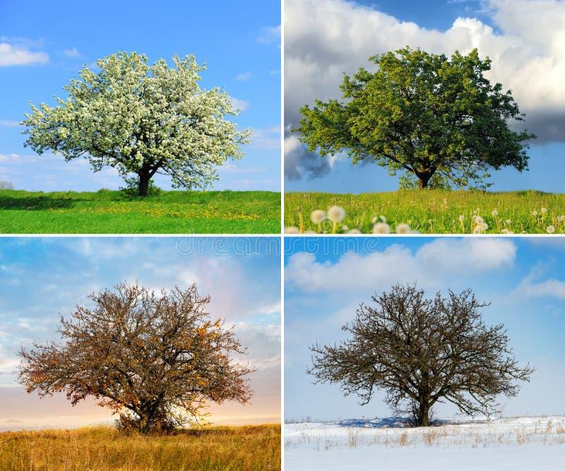 Alleen boom in van de vier seizoenen royalty-vrije stock afbeelding