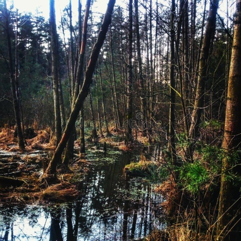 Alleen in bos stock afbeeldingen