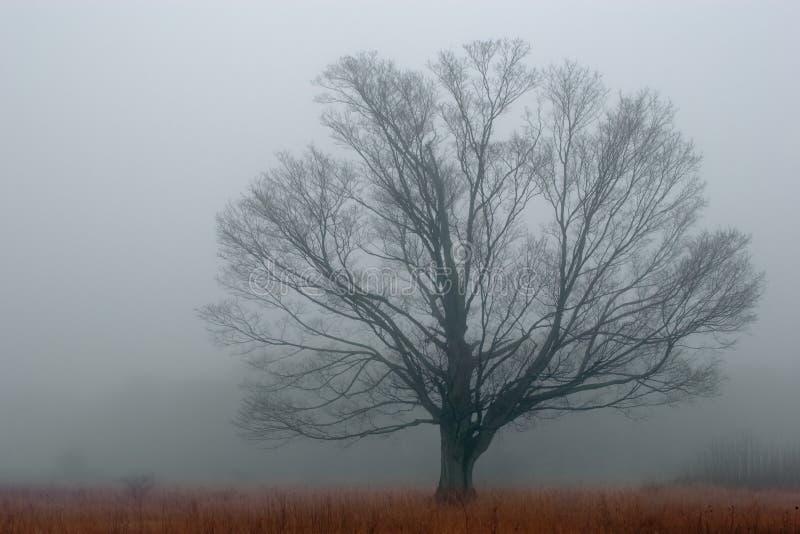 Alleen in de Mist stock afbeelding